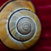 land snail i (original)