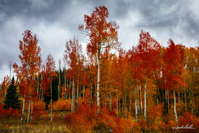 Reds & Gold in Summit County