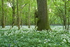 Garston Wood, Wiltshire