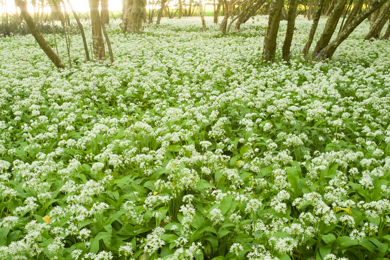 Garston Wood, Wiltshire
