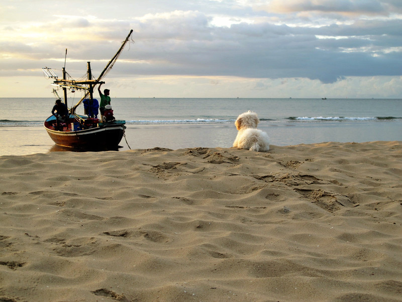 'Waiting for the master to return' - A dog waiting for its master to return after a pre-dawn fishing expedition.