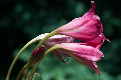 Garden Aug 24 2013