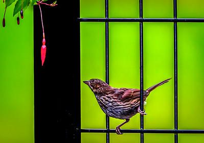 Bird And Red Fuchasia Flower