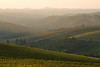 Hills of Chianti
