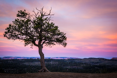 Lone Pine I