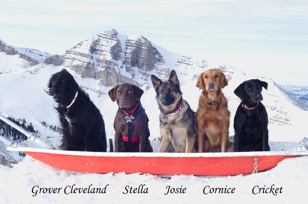 JHSP avalanche rescue dogs, 2012