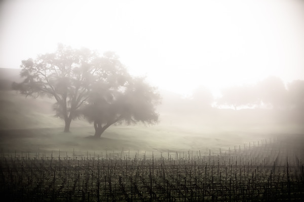 Philo, California Wine Country