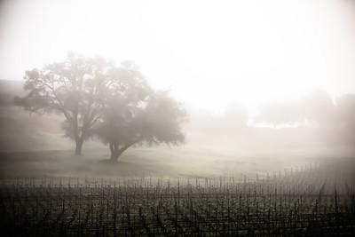 Philo, California Wine Country