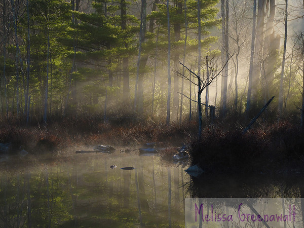 An early April morning casts golden reflections on a perfectly calm Perch Pond.