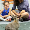 Allegra Boverman/Gloucester Daily Times. During the Audubon Ark program held at the Children's Library at the Sawyer Free Library on Wednesday morning a duck named Paddy and a rabbit named Jasmine from Drumlin Farm in Lincoln paid a visit. Children learned about each animal's habits and characteristics. Delighted by Jasmine as she ate fresh veggies such as sweet potatoes, romaine lettuce and broccoli are Loralai Gebhardt, 4, left, and her mom Nancy Gebhardt.