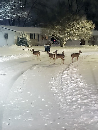 Deer in Rollin Hills subdivision while plowing snow.<br /> Submitted by Jeremy Giles