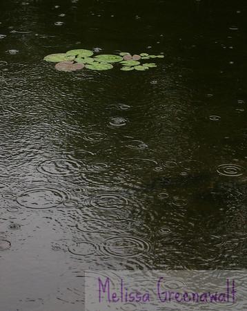 Listen...hear the rain?<br /> <br /> Perch Pond, Campton, NH.