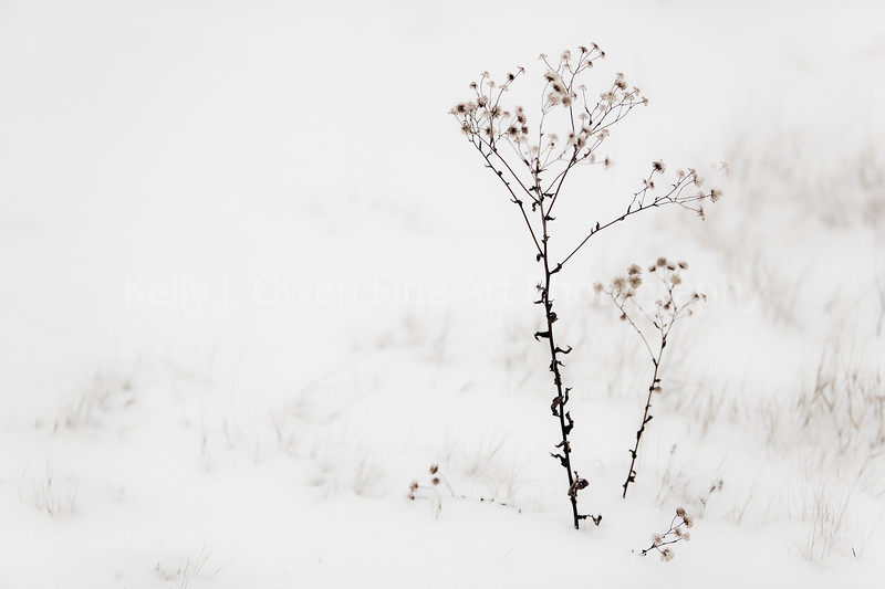 Snow Flowers (Kelly J. Owen)