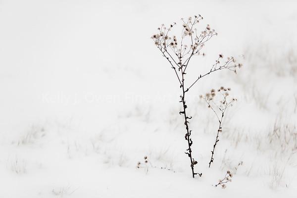 Snow Flowers (Kelly J. Owen)