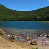 East Pond is a gem in the heart of the White Mountains.  An easy hike brings you to this warm, amazingly-clear pond ringed by mountains, where damselflies and dragonflies swoop in the breezes.