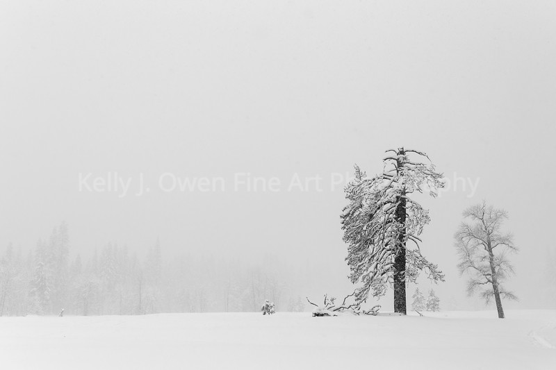 """Winter's Grace"" Yosemite National Park"