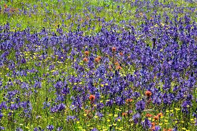multicolor_field_MG_0363_12x18
