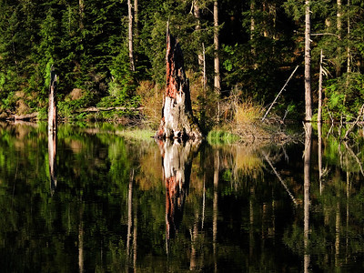 Stump Reflections Landscape