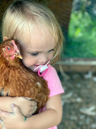 "Two-year-old Audrey Randolph takes care of the chickens. The Randolphs started their chicken journey in April with 10 baby chicks in the backyard of their Shelbyville residence. ""She absolutely loves caring for them, and helps every day feeding and watering them. She's my best chicken catcher!"" <br /> Submitted by Kelsey Randolph"