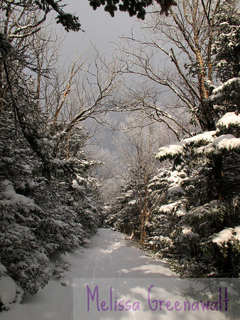 Winter jewels coat the trees along the Moosilauke Carriage Road, just below treeline.