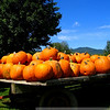 A cart full of fall: pumpkins await carving and pie-making.