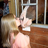 Makenzie Bushue gets a kiss from a horse named Mia in the Bushue family horse barn and indoor training center. Charles Mills photo