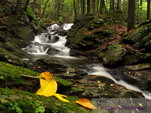 Early fall at Senter Falls.  I promise I didn't arrange the leaves to trace the pattern of the stream.