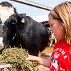 Eight-year-old Alicen Niemerg feeds alfalfa to a dairy cow at her family farm in Dieterich Wednesday morning.<br /> Keith Stewart Photo