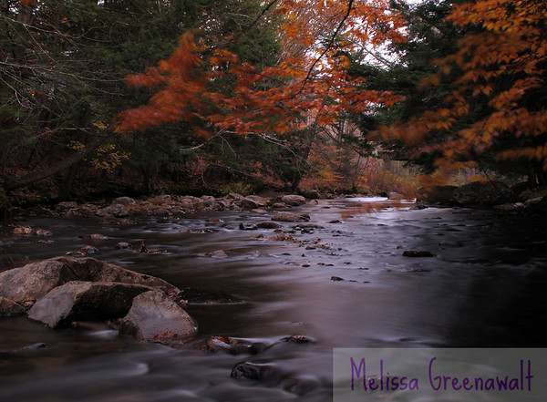 Long exposure of the Beebe River in Campton lends the beeches an almost Zen painting effect.  The slow shutter brings out that roasty-toasty coppery color everywhere in this photo: on the tree, along the bank, in the sheen of water, caught in the rocks. Even the rocks themselves seem to have picked up that color.