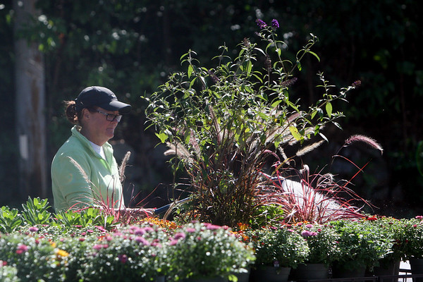 Allegra Boverman/Gloucester Daily Times Karen Sarofeen of Marshall's Farm Stand waters mums and other flowers on Tuesday morning.