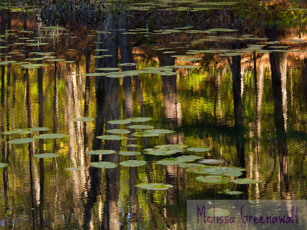 Kickin' it Monet-style at Quincy Bog in Rumney, NH. It's just like a painting!