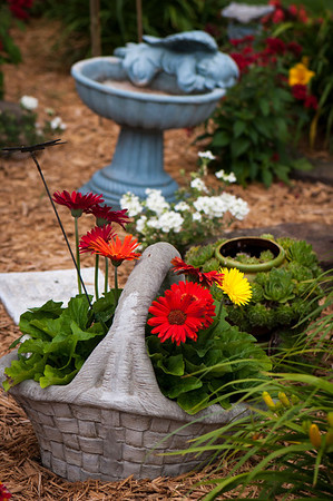 Gerber daisies offer a splash of warm summer color as they rise from a basket planter in the front yard.