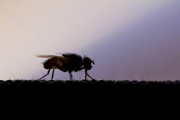 small fly that landed on my camera bag. loving my macro lens… amazing clarity!