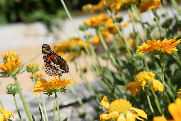 Taken around Enid A. Haupt Garden and the Smithsonian butterfly garden.