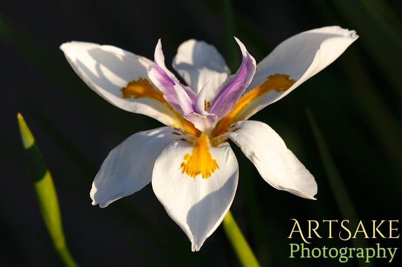Summer Flower in North Florida