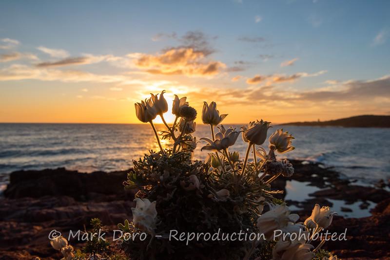 Last light, Boat Harbour, Port Stephens, NSW