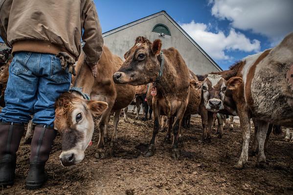 Honeywell Muck Boots Farm Shoot