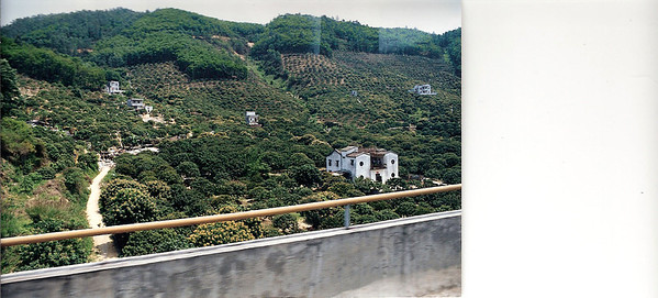 China, en route to Guangzhou Lychee Trees SM