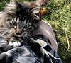 tantra kitty