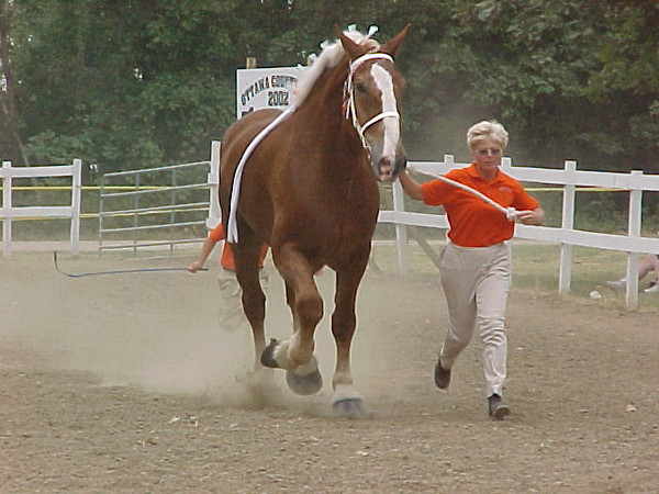 Kay working Walter <br /> Keep your feet clear of the horse
