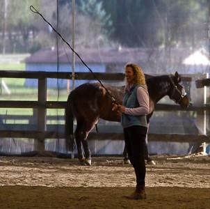 Horse Feb 2010