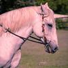 Unicorn fantasy version--need singel horn