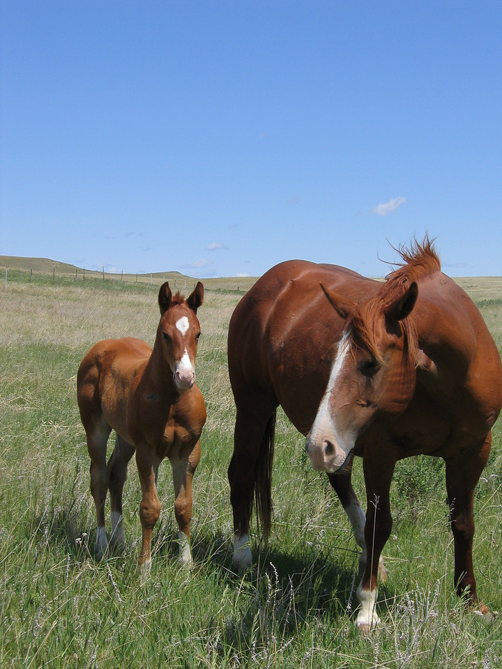 Kelly's mare and new colt - Jones - June 2004