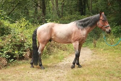 Horses-2013 August