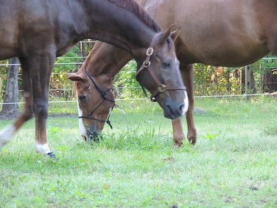 Horses 2014