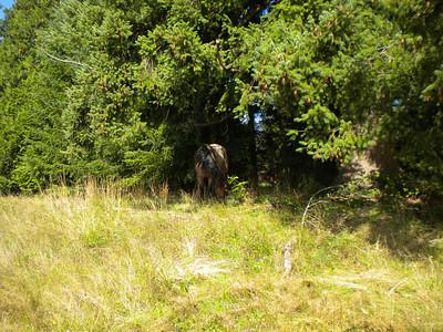 Horses Chess, Murphy, Keno Sept 2010