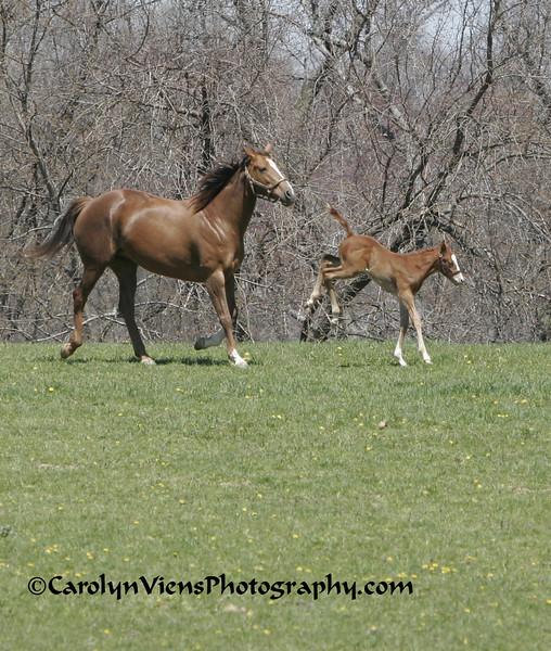 foal2 041708.jpg