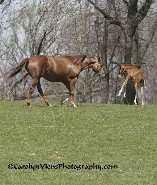 foal 041708.jpg