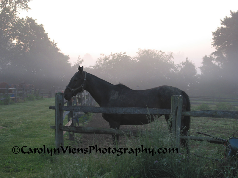 early morning at the farm.jpg