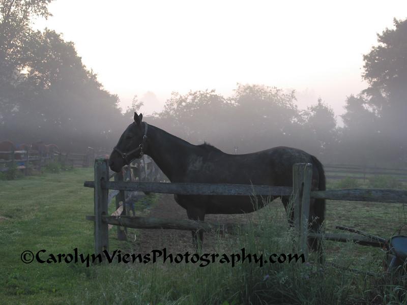 early morning at the farm.jpg